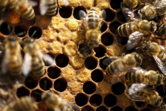 bees, colony collapse disorder, neonicotinoids, imidacloprid affects bees, news, environment, University of Nottingham bee research,