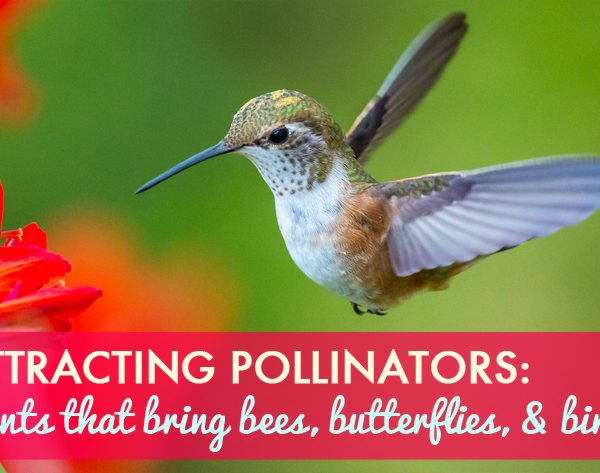 pollinators, pollinate, pollen, nectar, bees, honeybees, bumblebees, insects, bugs, moths, butterflies, endangered, birds, ladybugs, native species, native flowers, food security, ecosystem, ecological collapse