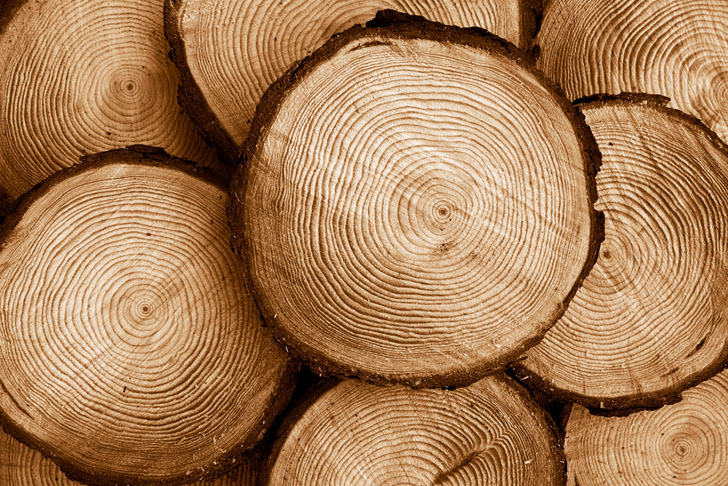Scientists Develop a Long-Lasting and Environmentally Friendly Battery Made from Wood