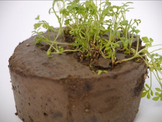 New Biodegradable 'Seeded' Concrete Sprouts Living Plants!