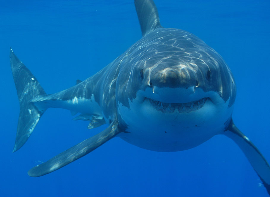 Harry the Shark Spotted Swimming Around Long Island Shore in