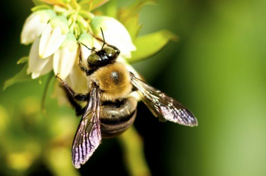 """Home Depot's """"Bee-Friendly Plants"""" are Laced with Toxic Pesticides"""
