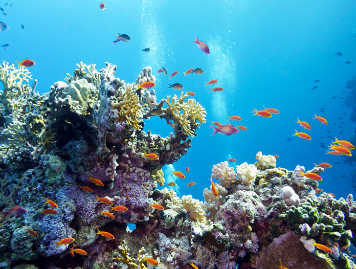 The Caribbean Has Lost 80% Of Its Coral Reefs According To Catlin Seaview  Survey