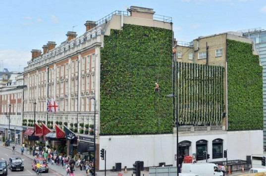 London\'s Largest Living Wall Springs to Life in Victoria | Inhabitat ...