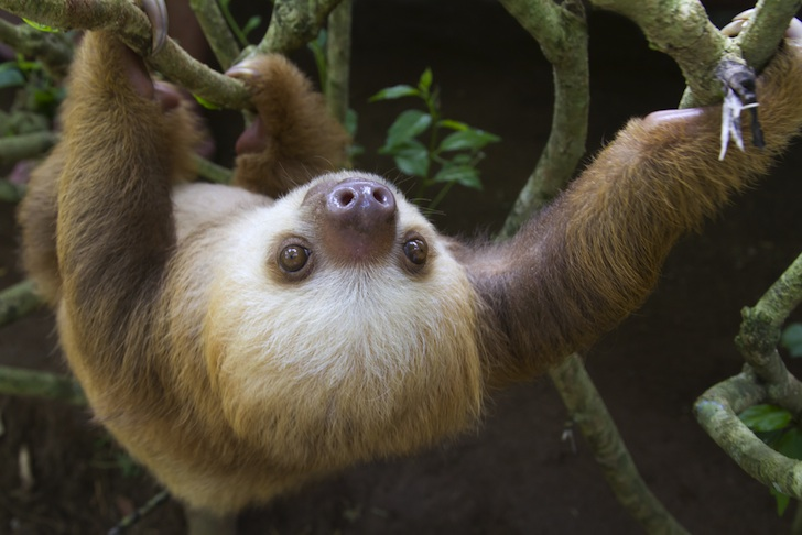 UPDATED: Costa Rica wants to close its zoos and free all captive animals