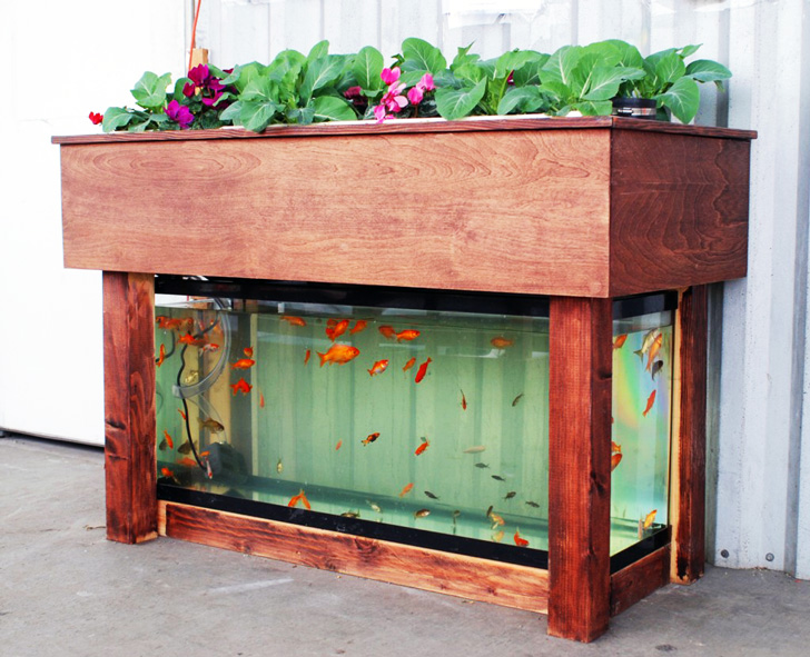 Aquaponics Of Course Is The Integration Of Hydroponics (growing Plants  Without Soil) And Fish Farming. Manduu0027s Particular System Is A Tray Of  Plants Set On ...
