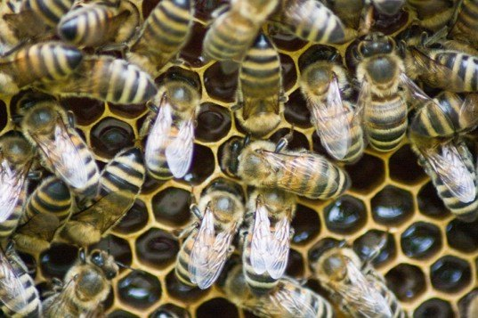 500,000 Bees Move Into Seattle-Tacoma Airport