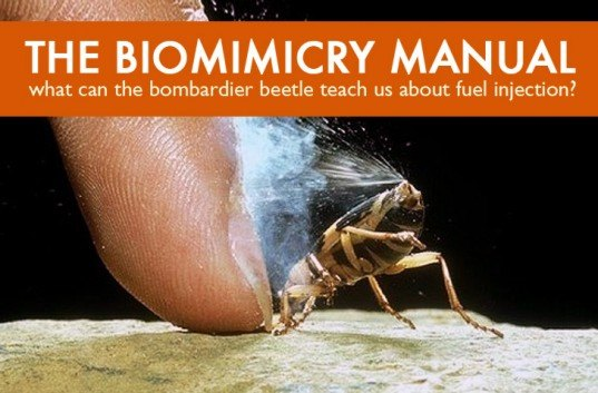 biomimicry, bioinspired design, bombardier beetle, beetles, bugs and design, green design, green innovation, inspired designs, fuel injection