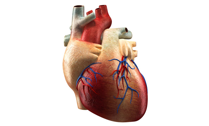 Scientists Grow Human Heart Tissue That Can Beat Autonomously ...