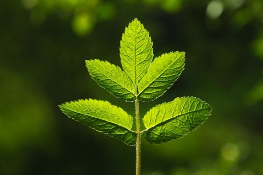 Researchers to Mimic Photosynthesis for Zero Carbon Liquid Fuel
