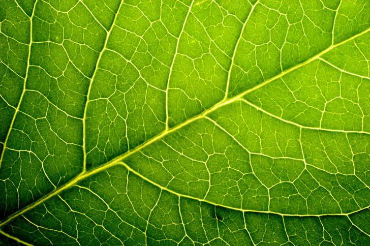Self Healing Solar Cells Mimic Plant Leaves To Repair