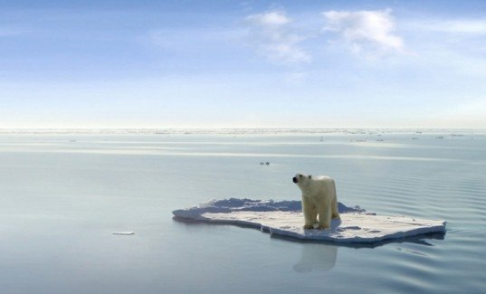 Svalbard, polar bears, global warming, endangered species, climate change, Arctic Ice, Nature, animals