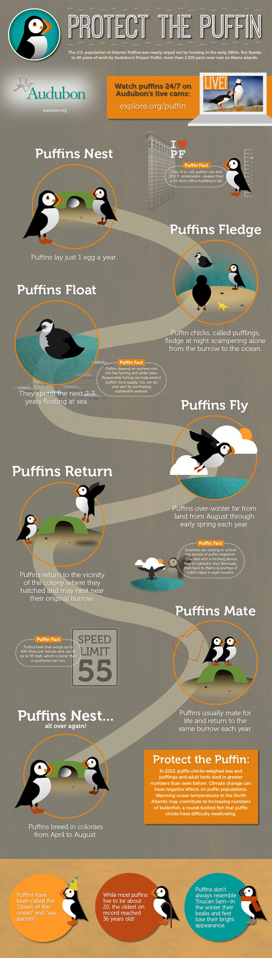 puffin, infographic, protect the puffin, national audubon society, endangered species, climate change, endangered birds