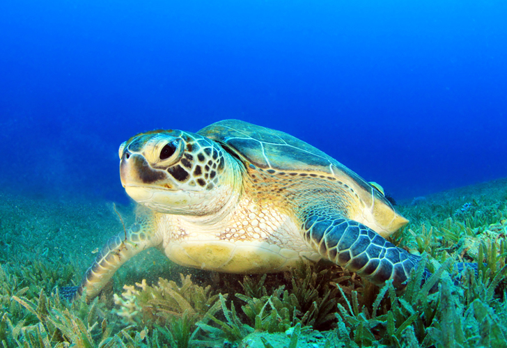 Green Sea Turtles are Ingesting Twice as Much Plastic as They Did 25 Years Ago