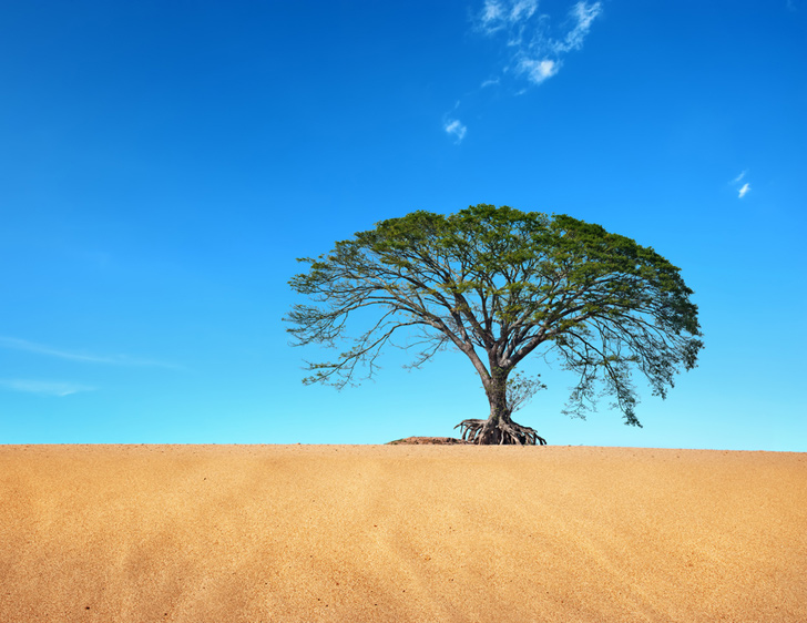 Image result for tree in desert