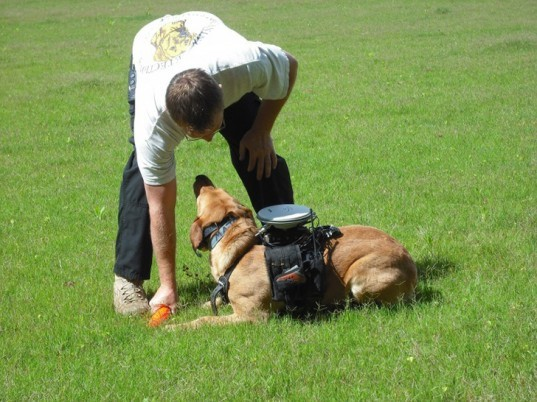How to train your dog, Jeff Miller, David Bevly, Wearable Technology, Auburn University, Dogs, Canine, K-9, working dogs, search and rescue canines, animal trainers, working pets, dog training, Department of Mechanical Engineering,