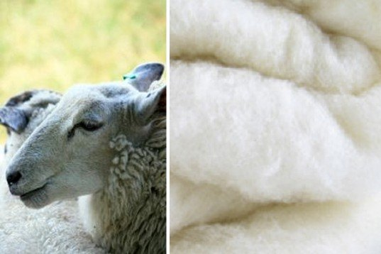 Meet the ten finalists in the cradle to cradle product for Sheeps wool insulation prices