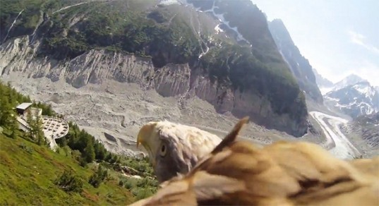 bird-mounted camera, bird eye view, bird POV, small cameras, bird flight videos, bird flight, Mont Blanc, fly like a bird, flight simulators, eagle flight