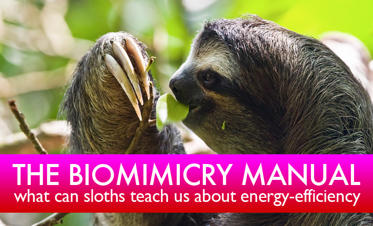 The Biomimicry Manual: What Can Sloths Teach Us About Energy Efficiency?