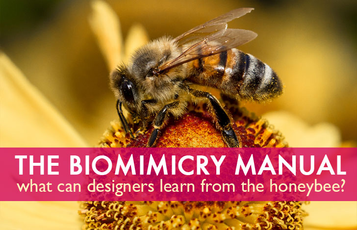 The Biomimicry Manual: What can the honeybee teach a designer?