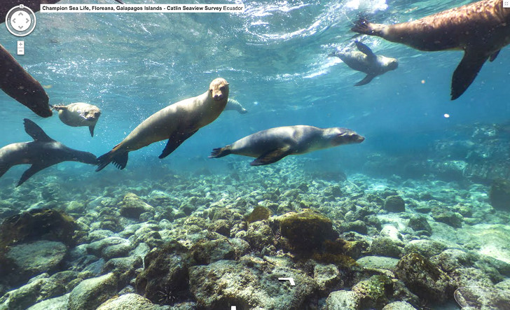 Google's New 'Street View' Maps Let You Dive in the Galapagos Islands!