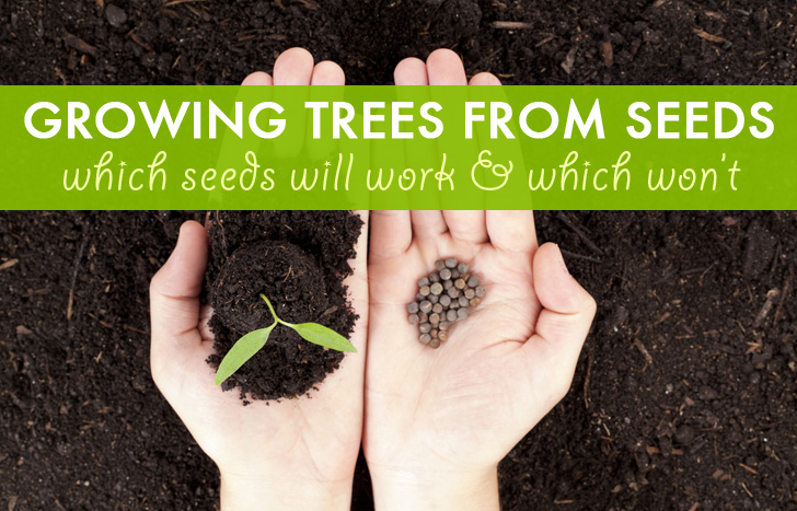 Growing Trees From Seeds Which Seeds Work And Which Won