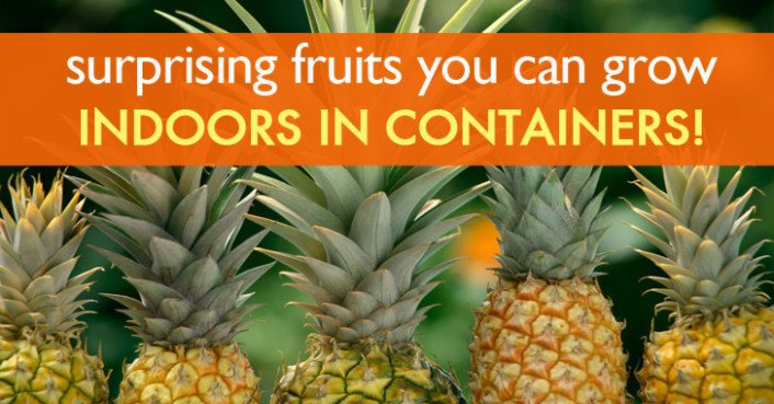 6 Surprising Fruits You Can Grow Organically Indoors In
