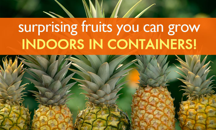 6 Surprising Fruits You Can Grow Organically Indoors in Containers!