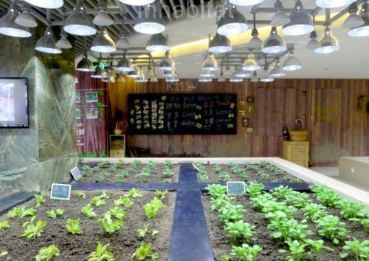 k11, shanghai, urban farm, urban garden, city gardening, public farming, art malls, eco design, sustainable design, green design, eco community, planting, seasonal growing, vegetable production