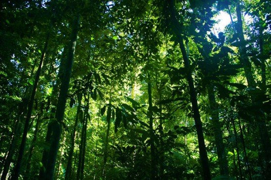 Honduran Government Returns One Million Hectares of Rainforest to Indigenous People