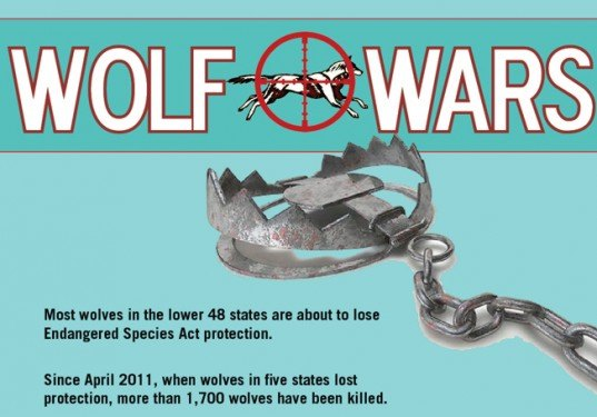 wolf wars, infographic, wolves, conservation, animals, endangered species act, gray wolves, environment, center for biological diversity, green graphics