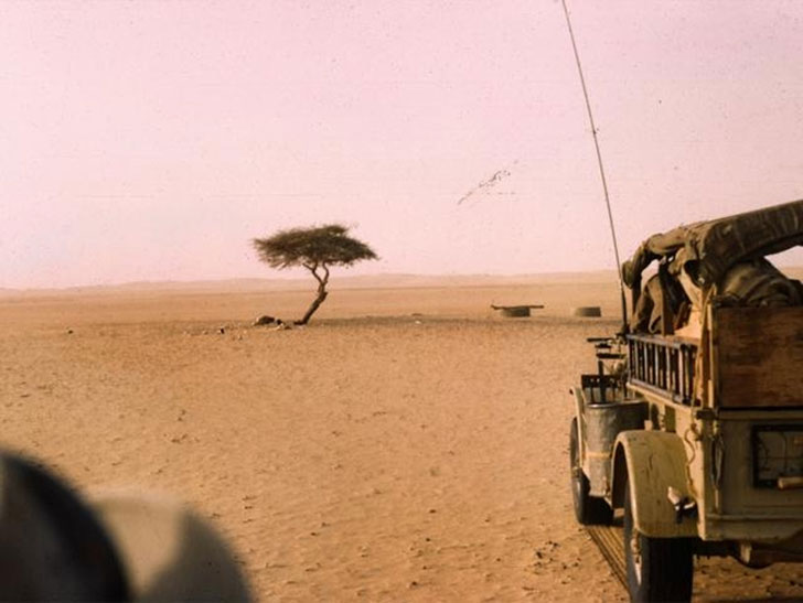World's Most Isolated Tree in Nigeria Knocked Down by a Drunk Driver