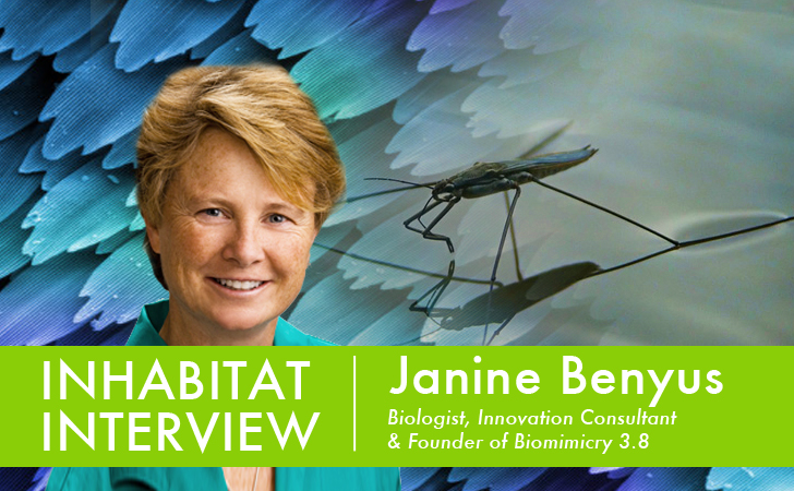 VIDEO: Inhabitat Interviews Janine Benyus, Author and Founder of Biomimicry 3.8