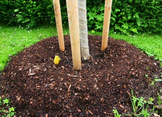 Mounded tree base, mounded plants, mound garden