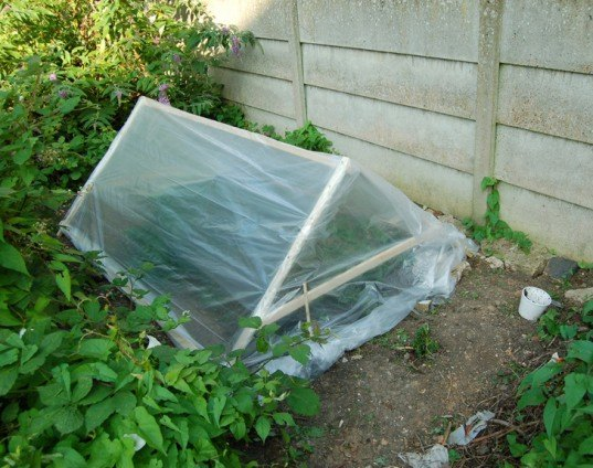 Garden, garden cloche, plant protection, autumn and winter