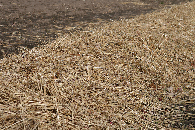 German Scientists Believe Straw Could be Used to Power Millions of Homes