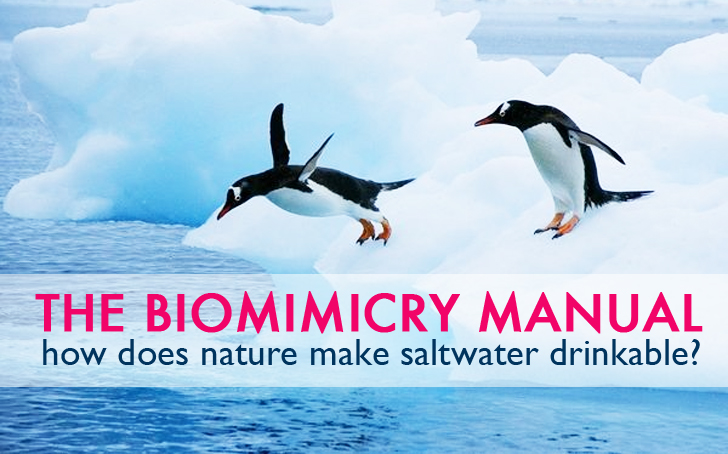 The Biomimicry Manual: How does nature make saltwater drinkable?
