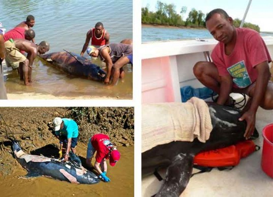 whale stranding, madagascar, melon headed whale, sonar mapping