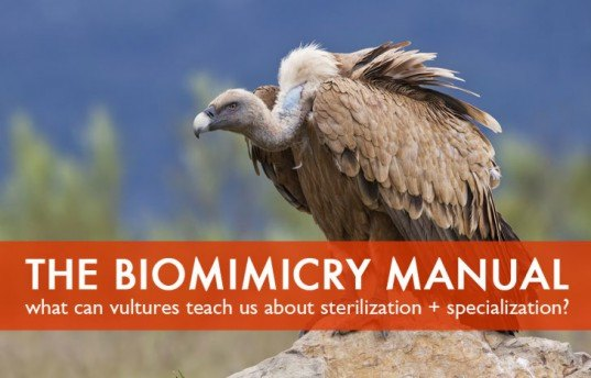The Biomimicry Manual: What can Vultures Teach Us About Sterilization and Specialization?
