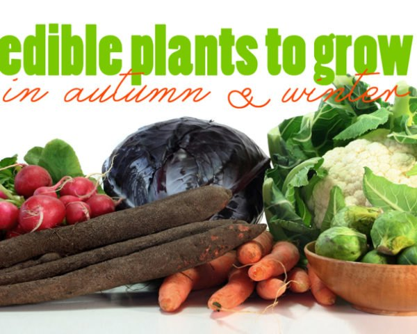 Edible Plants To Grow In Autumn And Winter