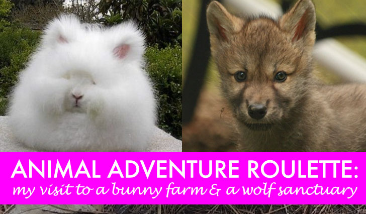 COMING SOON: An Animal Adventure Roulette With Subaru