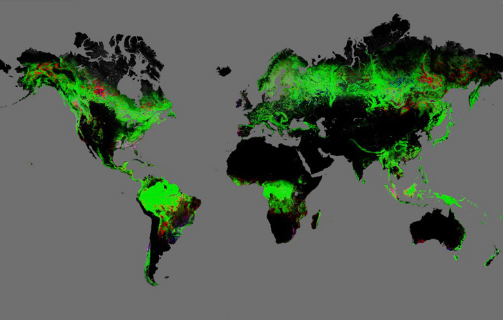 google launches worlds first high resolution interactive map of global deforestation