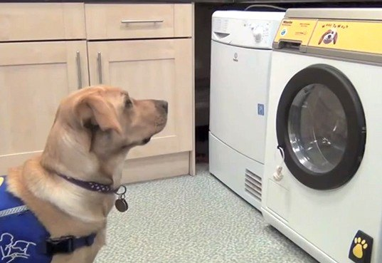 Woof To Wash Bark Activated Washing Machine Lets Service