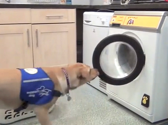 Jmt Miele Woof To Wash Laundry Machine For Service Dogs Washing
