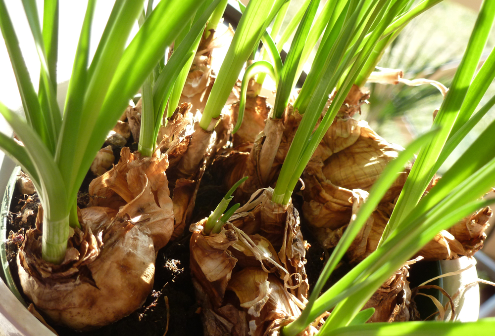Diy Force Flower Bulbs And Seeds To Beat The Winter Blues