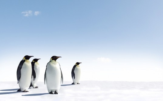 Antarctica, Antarctic expedition, ice core, million year old ice, climate change, ancient Earth climate, climate change, Earth climate cycles, ice age