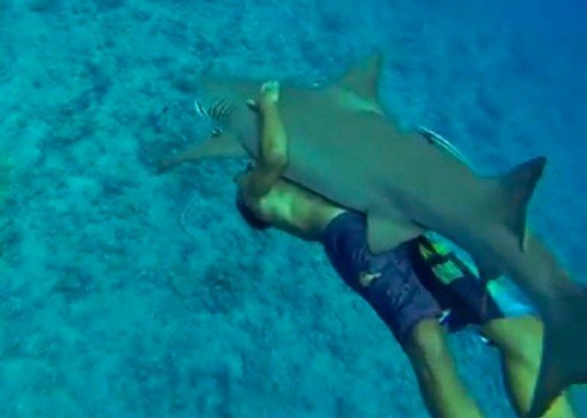 sharks, shark riding, ocean ramsey, oceanography, ocean research, shark attacks, ocean studies, shark riding,