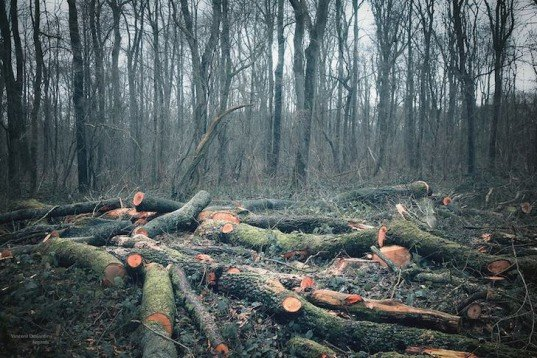 deforestation, sustainable agriculture, Warsaw climate conference, UN climate talks, global warming, sustainable farming, protecting rainforests, logging operations