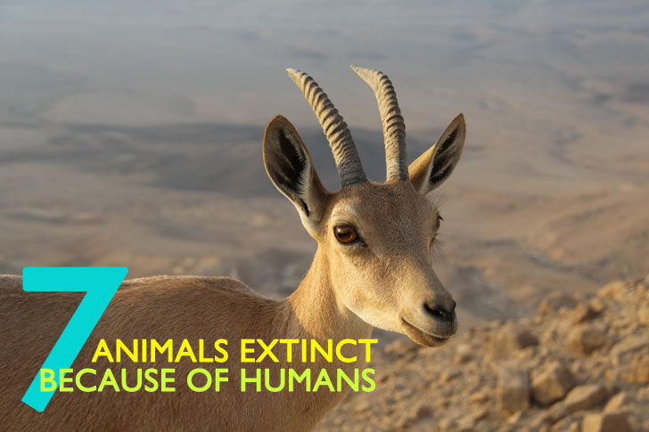 7 Animals Recently Driven to Extinction by Humans
