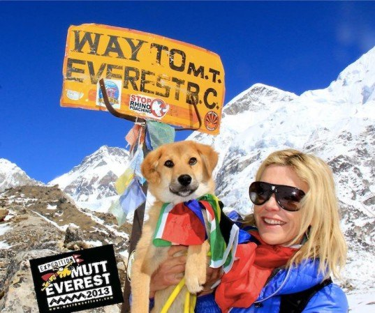 dogs, animal rescue, animal stories, dog climbs mount everest, animal success stories, puppy rescue, animal shelters, homeless pets